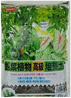培養土シリーズ 観葉植物培養土 12L×4袋 ヤマト