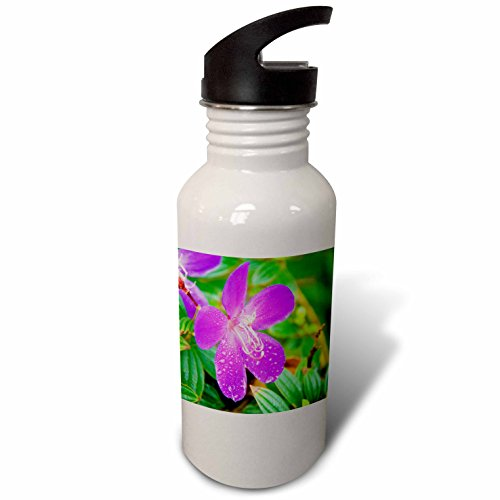 Tibouchina Urvilleana Princess Flower (3dRose Danita Delimont - Flowers - Sai Kung A Princess flower or Glory Bush. - Flip Straw 21oz Water Bottle (wb_225586_2))