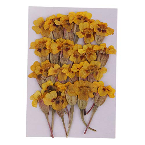 SM SunniMix 24 Pieces Pressed Real Maidenhair Dried Flower for Jewelry Making DIY Crafts Phone Case Decoration Handmade Accessories ()