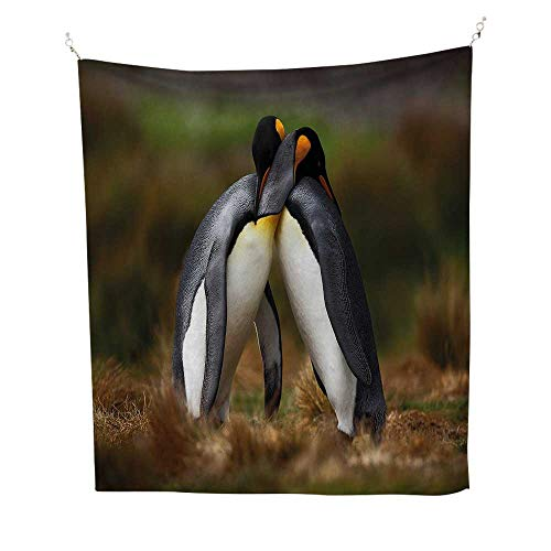 Animalfunny tapestryPenguins Cuddling in Wild Nature Love Valentines Affection Romance Falkland Islands 60W x 80L inch Quote tapestryMulticolor ()