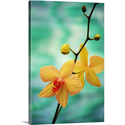 GREATBIGCANVAS Gallery-Wrapped Canvas Entitled Hawaii, Yellow Dendrobium with Orange Speckles, Orchid Flower On Plant by Allan Seiden 12