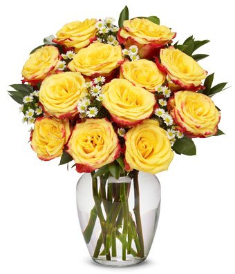 From You Flowers - One Dozen Festive Yellow Roses with Red Edges (Free Vase Included)