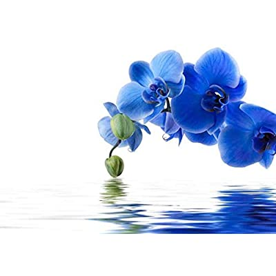 Blue Orchid Flowers Over a Lake Wall Mural, Classic Design, Stunning Composition