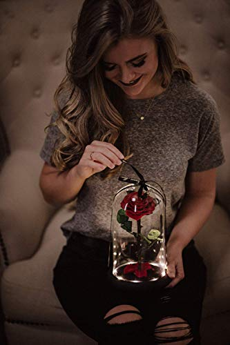 (Beauty and the Beast Rose in Glass Dome, Enchanted Real Preserved Red Rose in Large Glass Jar with LED twinkle lights)