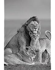 Slaapkamer muurschildering Leeuw In Het Donker Canvas Art Posters en Prints Dieren Wall Art Pictures Afrikaanse Leeuw Canvas Schilderij Thuis Muur Decor Cuadros 50X70CM(20 * 27inches)