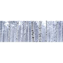 Startonight Canvas Wall Art Birch Trees Forest, Trees Glow in the Dark, Dual View Surprise Artwork Modern Framed Ready to Hang Wall Art 15.75 X 47.2 Inch 100% Original Art Painting
