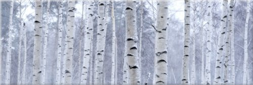 Startonight Canvas Wall Art Birch Trees Forest, Trees Glow in the Dark, Dual View Surprise Artwork Modern Framed Ready to Hang Wall Art 15.75 X 47.2 Inch 100% Original Art Painting by Startonight