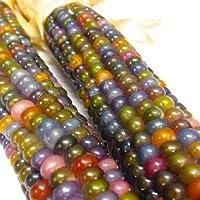 *Selten* Regenbogen Mais/Bunter Mais/ca. 20 Samen/Vitaminreich