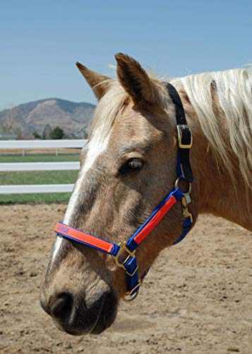 Horse Halters and Personalized Horse Halters