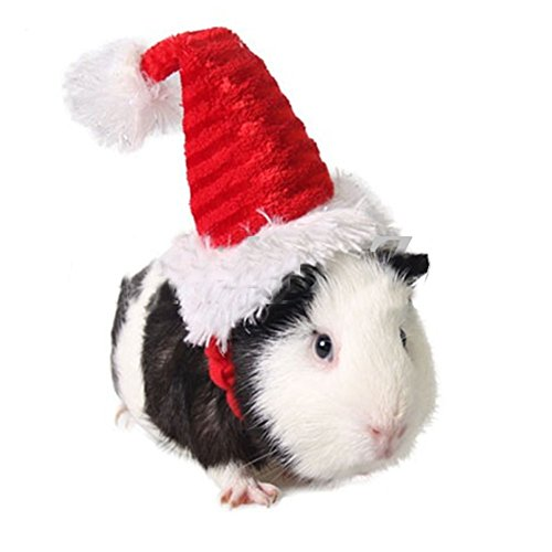 Guinea Pigs In Christmas Costumes (Mummumi Pet Holiday and Christmas Hat, Pet Santa Hat Costume Christmas Collection Pet Accessory For Cat Rabbit Hamster Guinea Pig, Small, Red (A))
