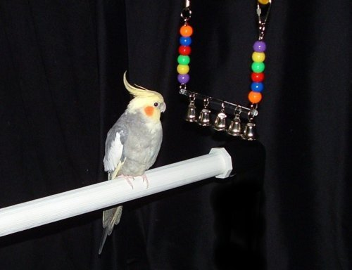 FunTime Birdy Ring My Bell Bird Toy for Conures and Cockatiel size birds (Toy My Bell Bird Ring)