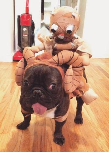 french bulldog clothes french bulldog costume halloween costume for french bulldog french bulldog & French Bulldog Costume - Top 10 for a Frenchie Halloween