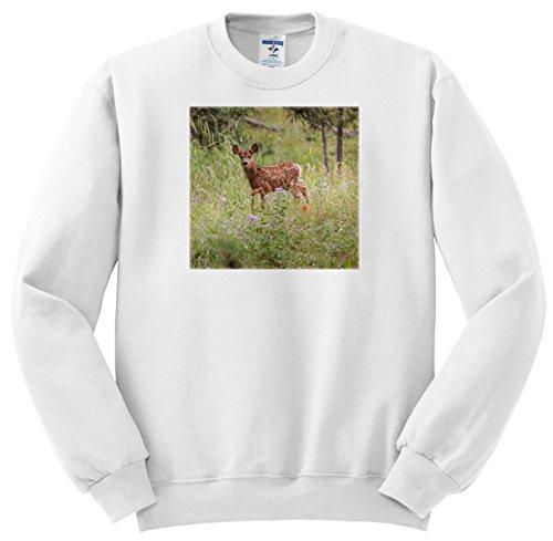 3dRose Danita Delimont - Deer - USA, Colorado, Woodland Park. Mule Deer Fawn In Meadow. - Sweatshirts - Youth Sweatshirt Large(14-16) - Park 12 Meadows