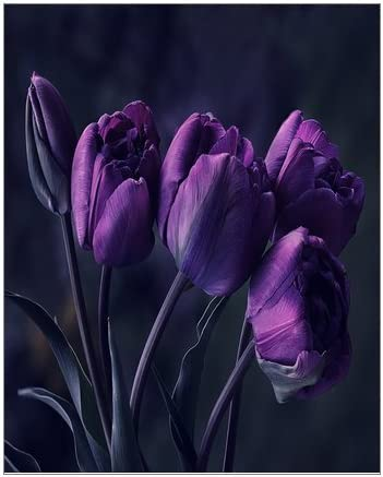 Creative Beautiful Modern Abstract Artwork Canvas Wall Art Pretty Deep Purple Tulip Flower Canvas Print 8 X 10 Inch Stretched And Framed Painting Artwork Home Decor Wall Living Room