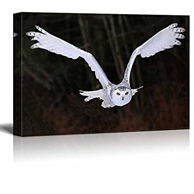 Canvas Prints Wall Art - A Flying Snowy Owl Animal/Bird Photograph | Modern Wall Decor/Home Decoration Stretched Gallery Canvas Wrap Giclee Print & Ready to Hang - 16