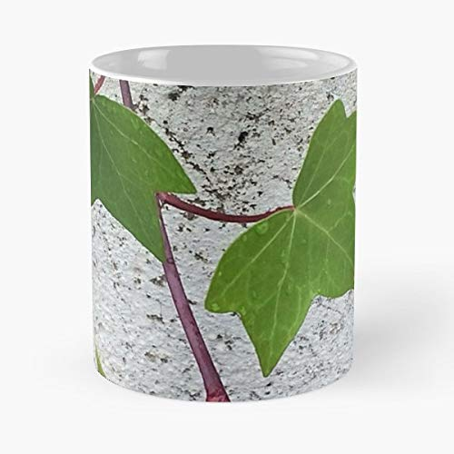 (Vines Leaves And All Things Natural It Was Very Pretty Eye Catching Just Like You Add This To Your Collection Watch Pop - 11 Oz Coffee Mugs Unique Ceramic Novelty Cup, The Best Gift For Holidays.)