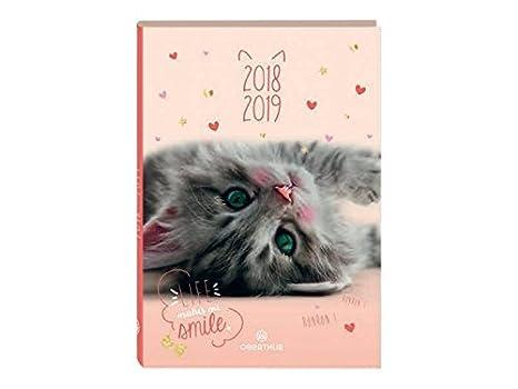 Oberthur - 1 agenda (gato Miaou - septiembre 2018 A septiembre 2019 - 12 x 17 cm: Amazon.es: Oficina y papelería