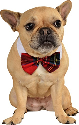 Plaid Bow Tie Pet Costumes (Rubies Costume Company Red Plaid Pet Christmas Bowtie, Medium/Large)