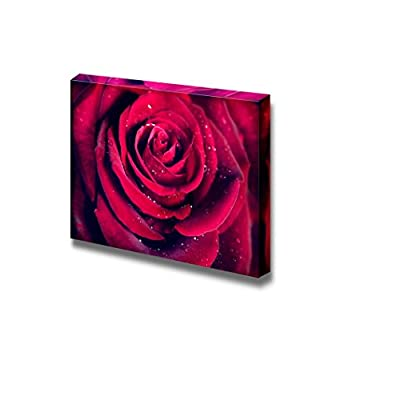 Canvas Prints Wall Art - Closeup of Dark Red Rose Flower Against Black Background | Modern Wall Decor/Home Decoration Stretched Gallery Canvas Wrap Giclee Print & Ready to Hang - 24
