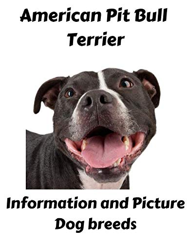 (American Pit Bull Terrier Information and Picture: Dog)