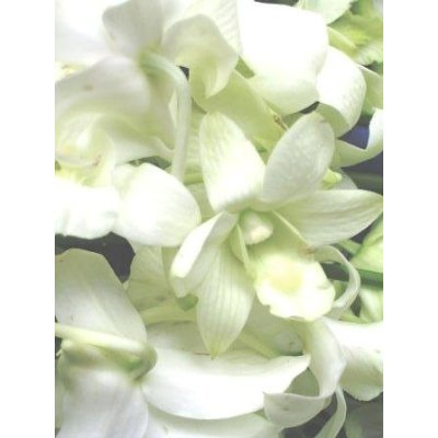 Fresh Flowers- 10 White Dendrobium Orchids