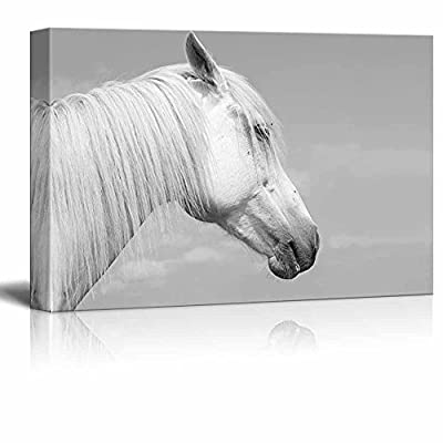 Canvas Prints Wall Art - Head of a White Horse Against The Sky | Modern Wall Decor/Home Decoration Stretched Gallery Canvas Wrap Giclee Print & Ready to Hang - 16