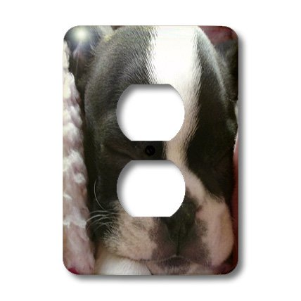 3dRose lsp_22237_6 Boston Terrier Puppy 2 Plug Outlet Cover