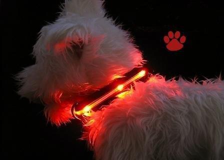 Esky LED Halsband / Hundehalsband / Leuchthalsband dog collar mit gelber LED-Beleuchtung, 2 Modi, Länge einstellbar zwischen 13,5 Zoll und 21 Zoll,360 Grad sichtbar,