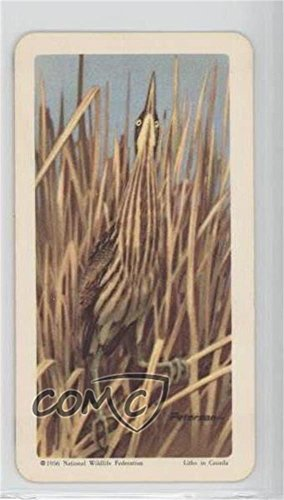 American Bittern (Trading Card) 1962 Brooke Bond Red Rose Birds of North America - Tea [Base] - Canadian Black Backs #5
