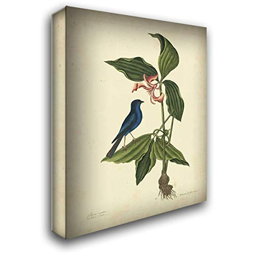 Catesby Bird and Botanical IV 28x36 Gallery Wrapped Stretched Canvas Art by Catesby, Mark