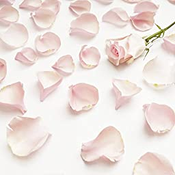 Farm Fresh Natural Pink Rose Petals - 5000 petals
