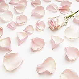 Farm Fresh Natural Pink Rose Petals - 5000 petals