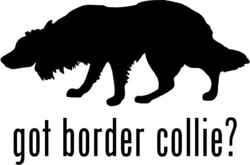 Got Border Collie - Got Border Collie Herding Dog Pet Graphic Car Truck Window Decor Decal Sticker - Die cut vinyl decal for windows, cars, trucks, tool boxes, laptops, MacBook - virtually any hard, smooth surface