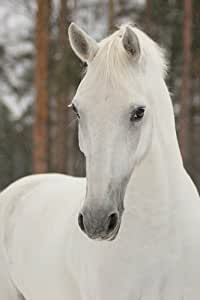 Startonight Wall Art Canvas Horse White