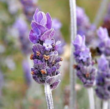 Loving Naturals Daily UV Cream All Natural Daily Sunscreen SPF 20 Non-Nano Zinc Oxide UVA/UVB 4 oz Lavender