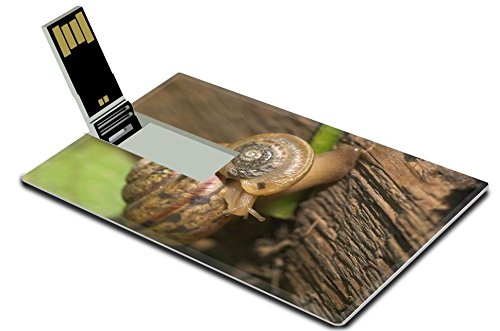 luxlady-8gb-usb-flash-drive-20-memory-stick-credit-card-size-image-id-3512151-snail-s-family