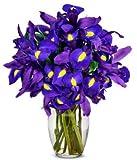 Flowers - Stunning Blue Iris - 10 Stems