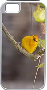 Blueberry For Iphone 6Plus 5.5Inch Case Cover Yellow Parrot on a branch Design