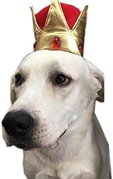Migliori 7 Cappelli per cani