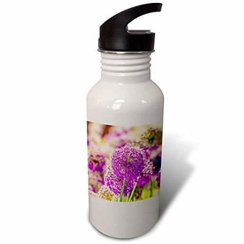 3dRose Alexis Photography - Flowers - Purple decorative onion flowers, soft beige background - Flip Straw 21oz Water Bottle (wb_271871_2)