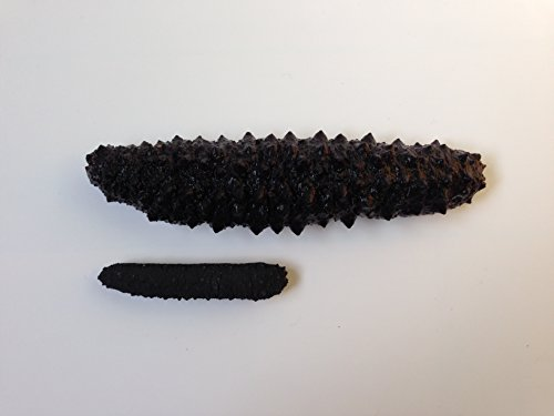 海参天下 Wild Black pin Atlantic Dried Sea cucumber 8oz pack (60-90pcs #5)大西洋岩刺参 8oz(60-90头,5号) by Sea Cucumber Inc (Image #3)