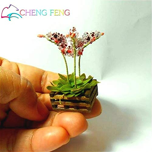 Green Seeds Co. 100 Unids Mini Bonsai Orquídea bonsai Interior ...
