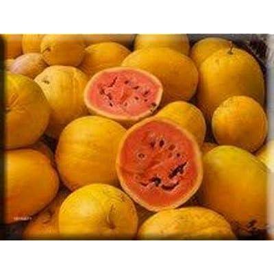 Golden Midget Heirloom Watermelon Seeds Non-GMO : Garden & Outdoor