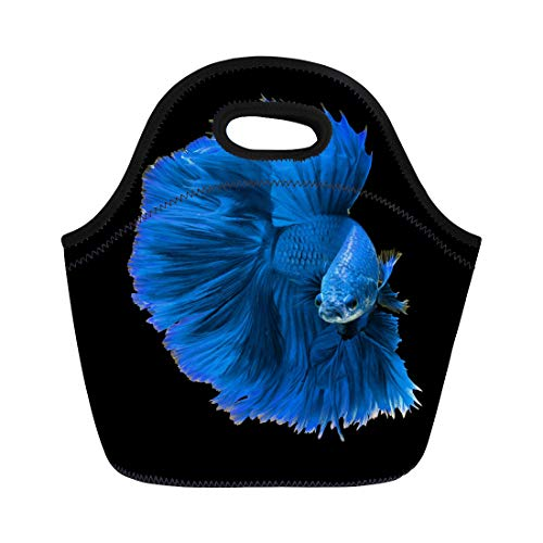Semtomn Neoprene Lunch Tote Bag Colorful Fancy Blue Dragon Siamese Fighting Fish Betta Aggressive Reusable Cooler Bags Insulated Thermal Picnic Handbag for Travel,School,Outdoors,Work