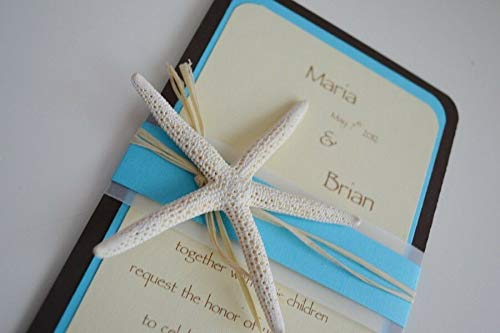 JumpingLight 50 PCS White Finger Starfish Star Shell Wedding Invitation 3'' - 4'' #7369 Beach Wedding Nautical Decor Crafts - Beach Nautical