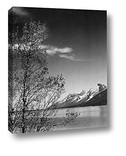 View of Mountains with Tree in Foreground, Grand Teton National Park, Wyoming, 1941 by Ansel Adams - 22