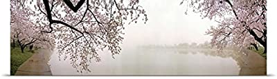"""GREATBIGCANVAS Entitled Cherry Blossoms at The Lakeside, Washington DC, Poster Print, 60"""" x 14"""", Multicolor"""