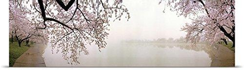 GREATBIGCANVAS Entitled Cherry Blossoms at The Lakeside, Washington DC, Poster Print, 60