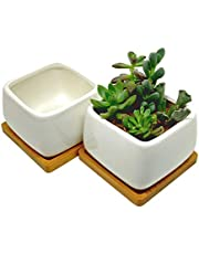 Square Succulent Planters with Bamboo Tray