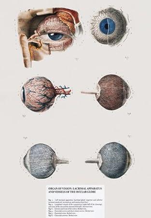 ML13 Vintage 1800 \'s Medical Menschliche Auge & Schiffe Nerven ...